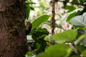 Costa Rica-26